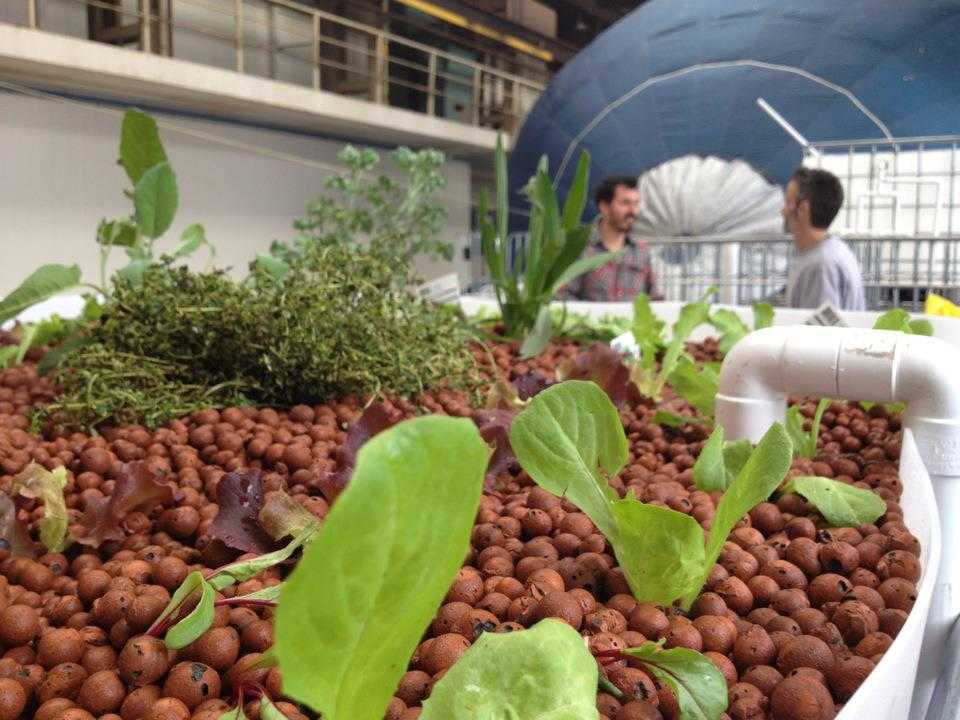 What Kind Of Food Can You Grow With Aquaponics
