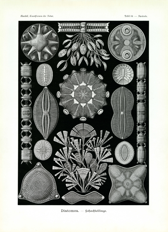 Ernst Haeckel: biography, scientific work. Haeckels contribution to biology